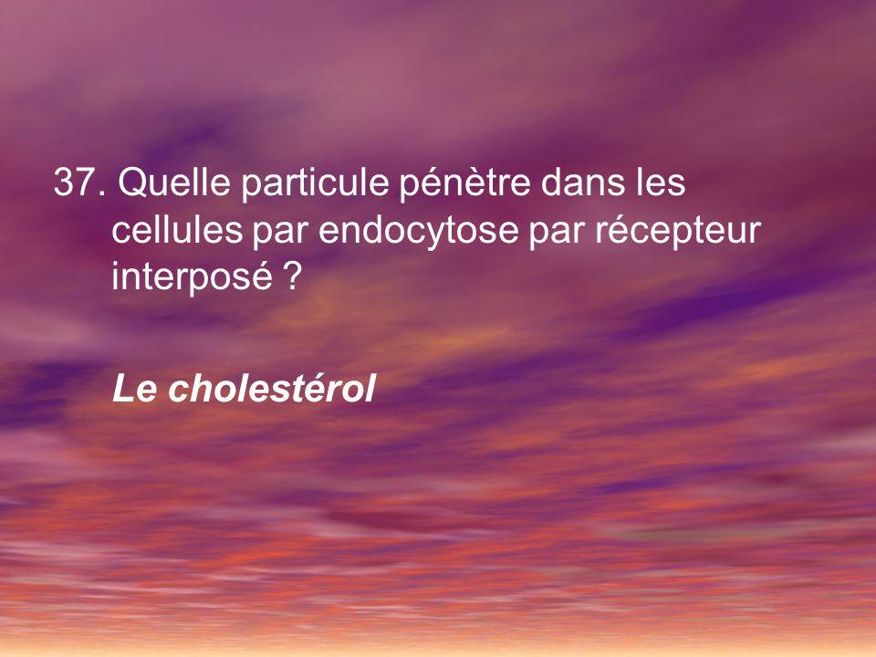 Lexocytose 38.Quest-ce que lexocytose .