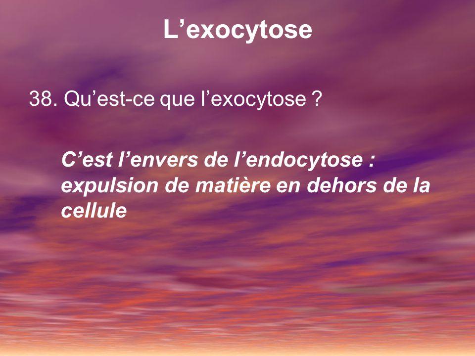39.Comment fonctionne lexocytose .