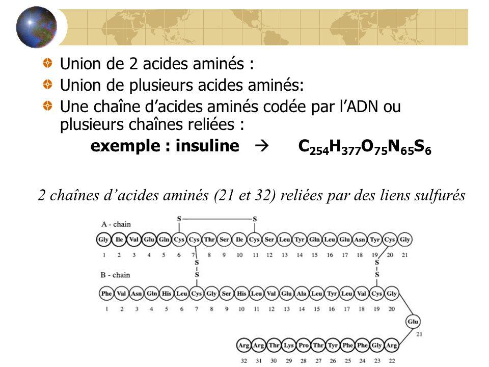 Union de 2 acides aminés : dipeptide Union de plusieurs acides aminés: polypeptide Une chaîne dacides aminés codée par lADN ou plusieurs chaînes reliées : protéine exemple : insuline C 254 H 377 O 75 N 65 S 6 2 chaînes dacides aminés (21 et 32) reliées par des liens sulfurés