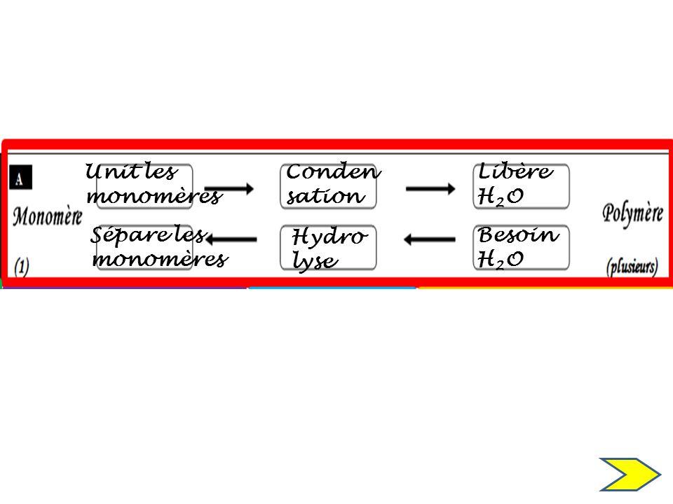 Besoin H 2 O Libère H 2 O Hydro lyse Conden sation Unit les monomères Sépare les monomères