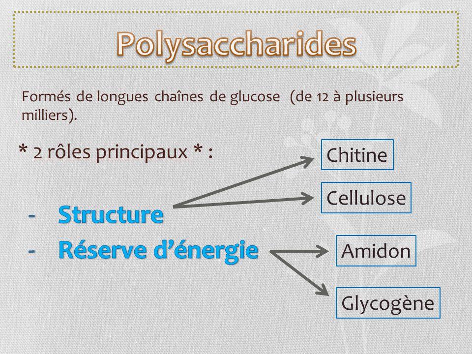 Formés de longues chaînes de glucose (de 12 à plusieurs milliers). * 2 rôles principaux * : Chitine Cellulose Amidon Glycogène
