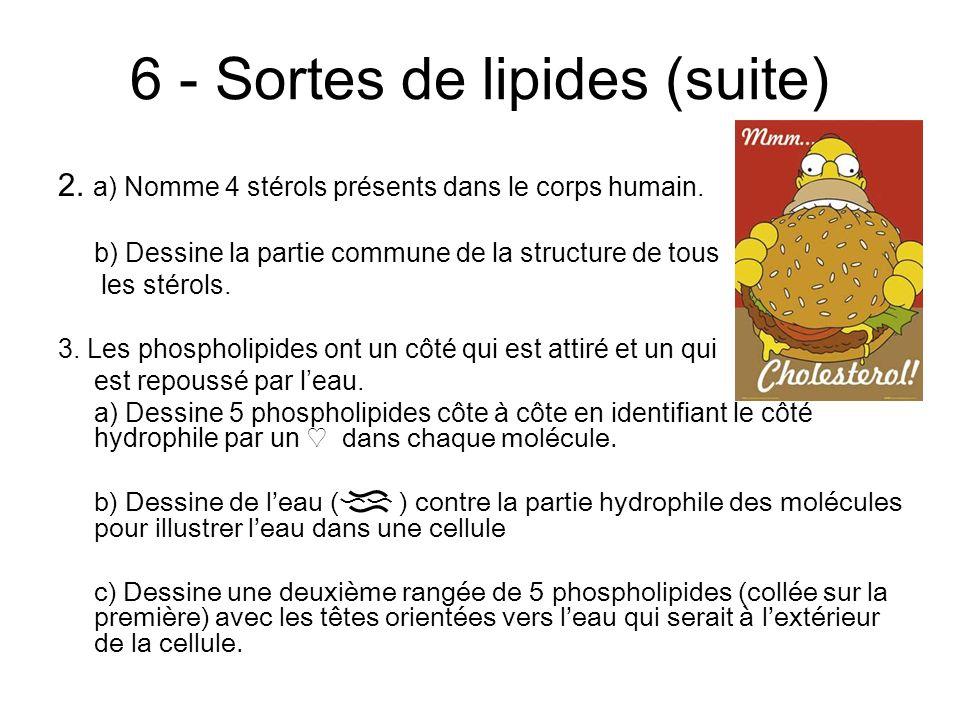 6 - Sortes de lipides (suite) 2. a) Nomme 4 stérols présents dans le corps humain.