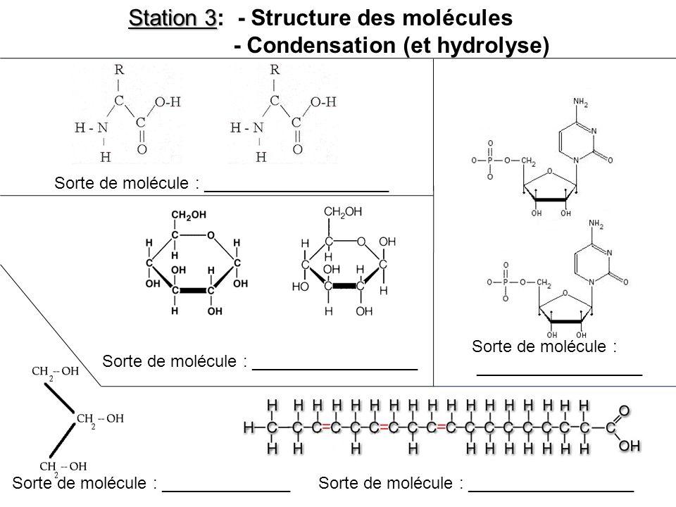 Sorte de molécule : ____________________ Sorte de molécule : __________________ Sorte de molécule : ______________ Sorte de molécule : __________________ Station 3 Station 3: - Structure des molécules - Condensation (et hydrolyse)