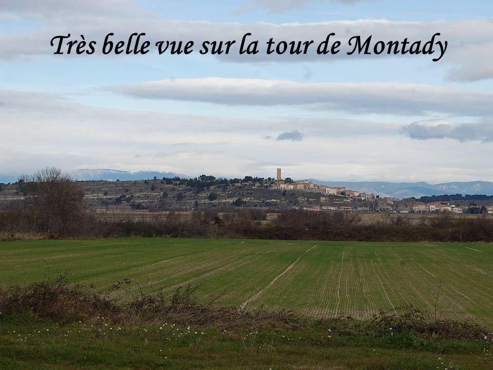 Très belle vue sur la tour de Montady