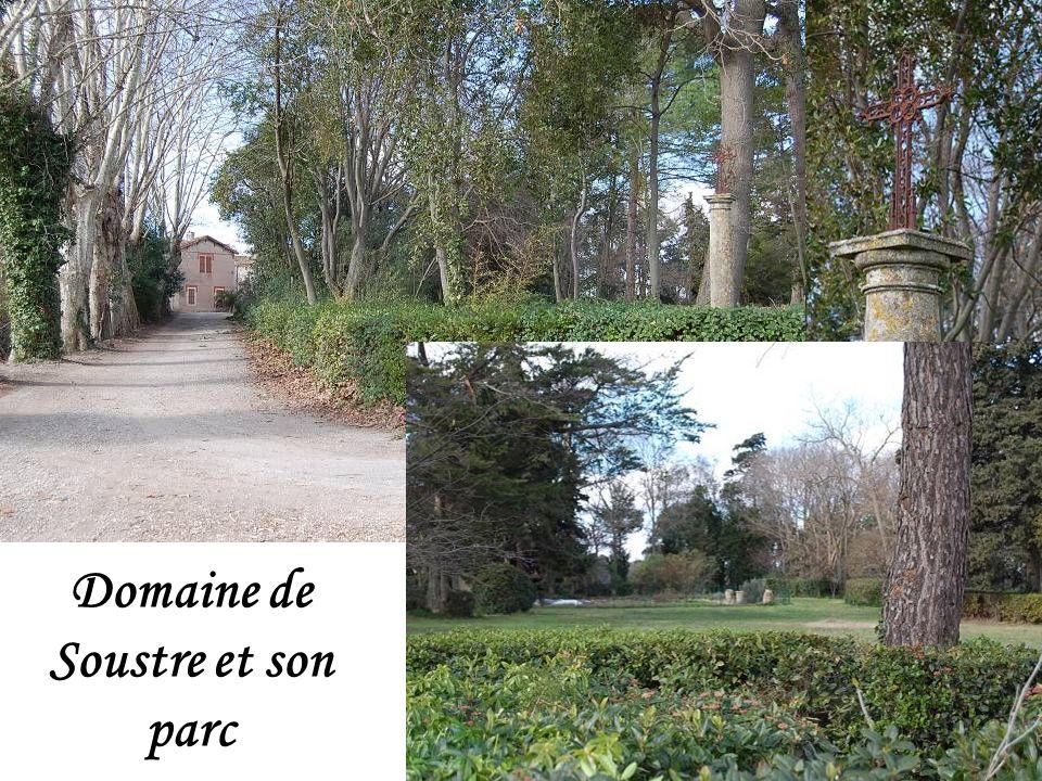 A proximité du domaine de Soustre Une taille de la vigne automatisée.