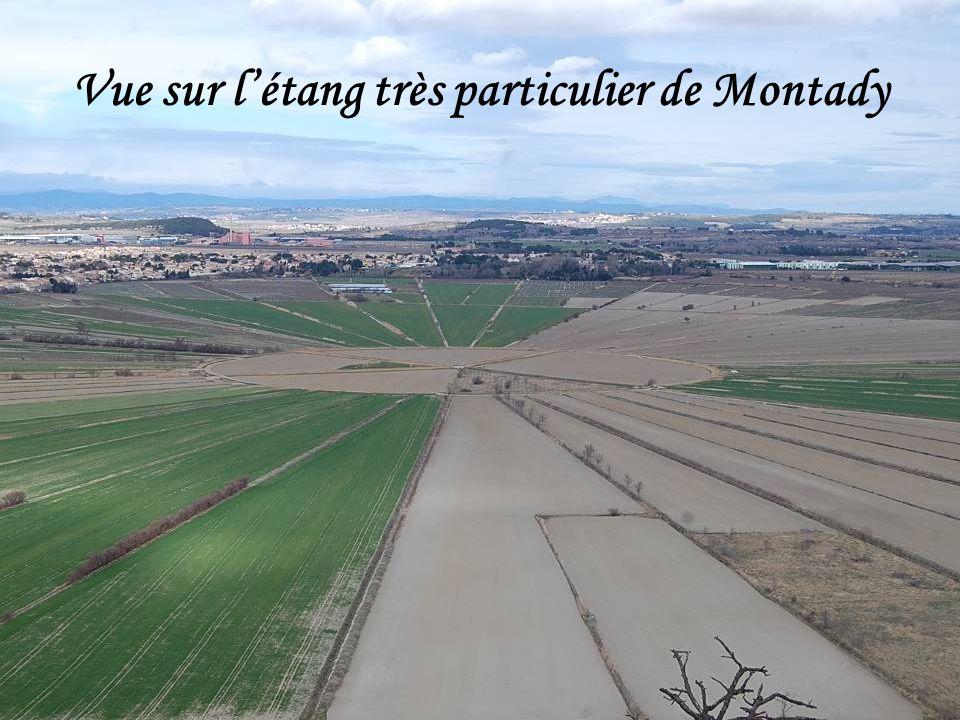 Vue sur létang très particulier de Montady