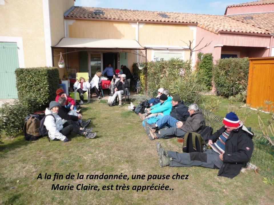 Canard Canne Copains et copine de Marie Claire