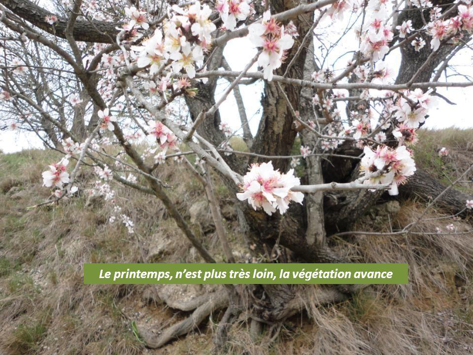Le printemps, nest plus très loin, la végétation avance