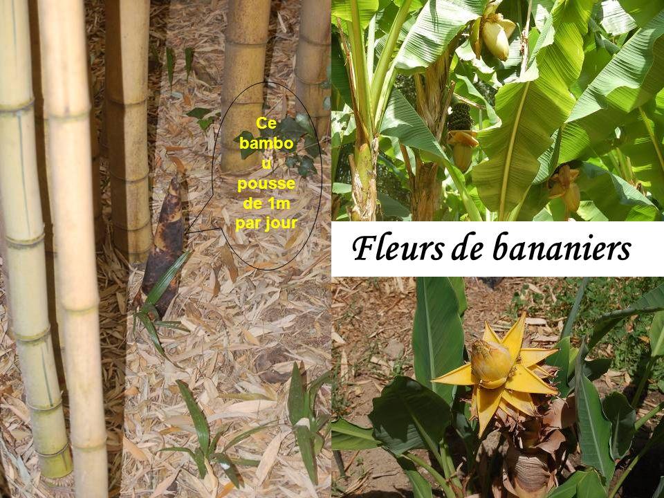 Le guide nous dit tout, tout, tout sur les bambous