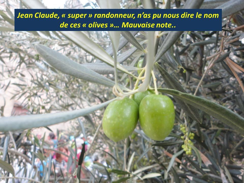 Jean Claude, « super » randonneur, nas pu nous dire le nom de ces « olives »… Mauvaise note..