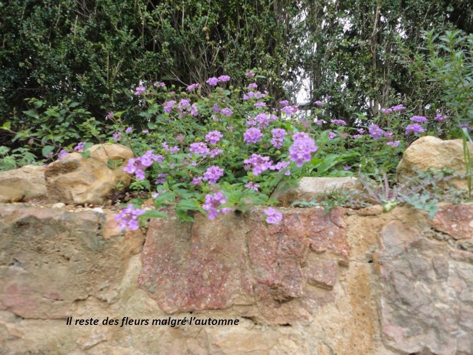 Il reste des fleurs malgré lautomne