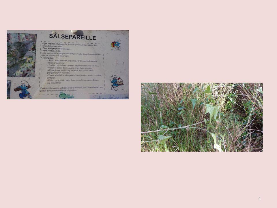 La randonnée commence par la découverte du sentier botanique commenté par les élèves de lécole élémentaire de Fleury dAude. 3