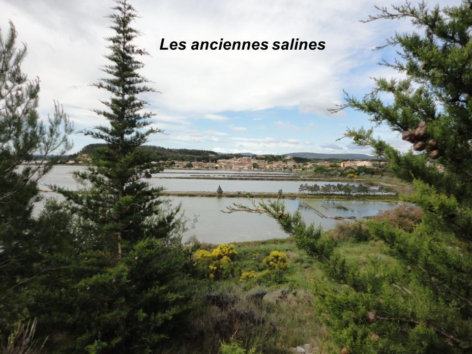 Au loin, le Village de Peyriac