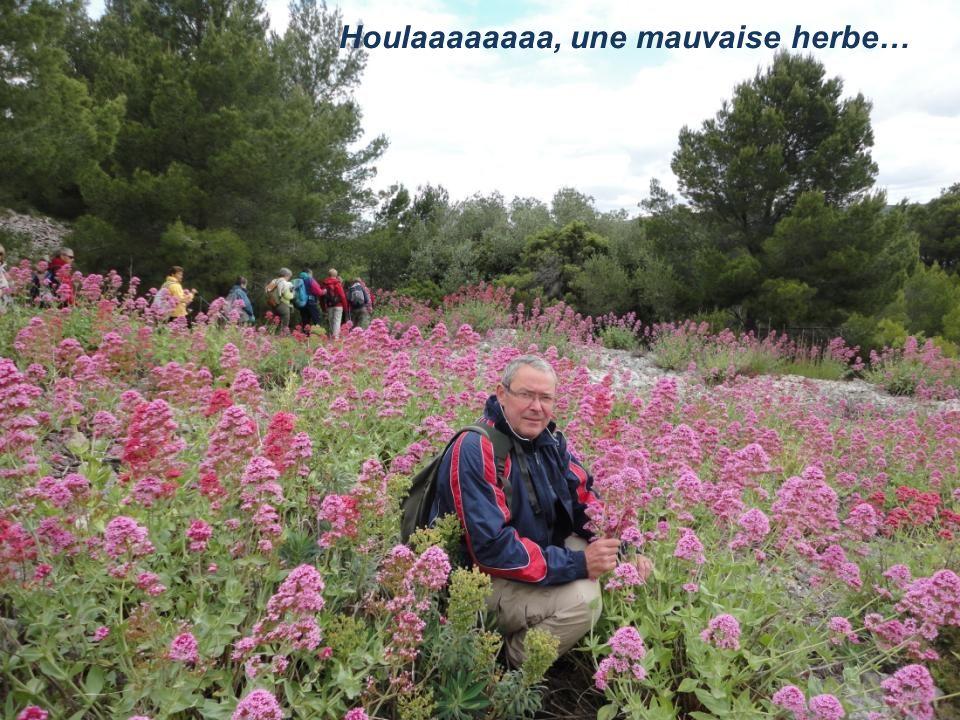 Les filles dans les fleurs