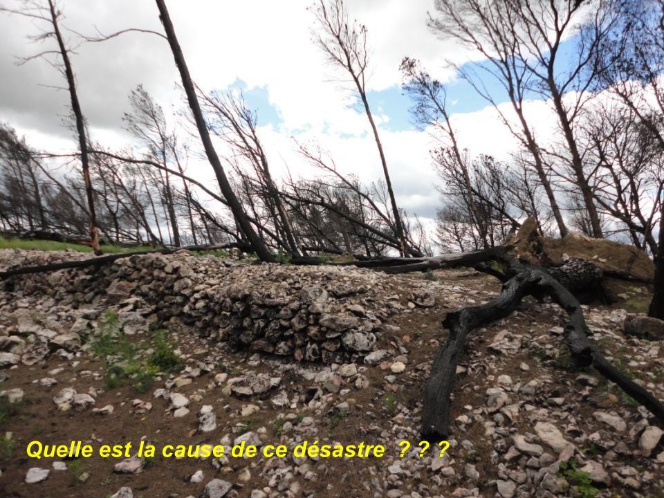 Malgré un feu de forêt, la nature reprend ses droits