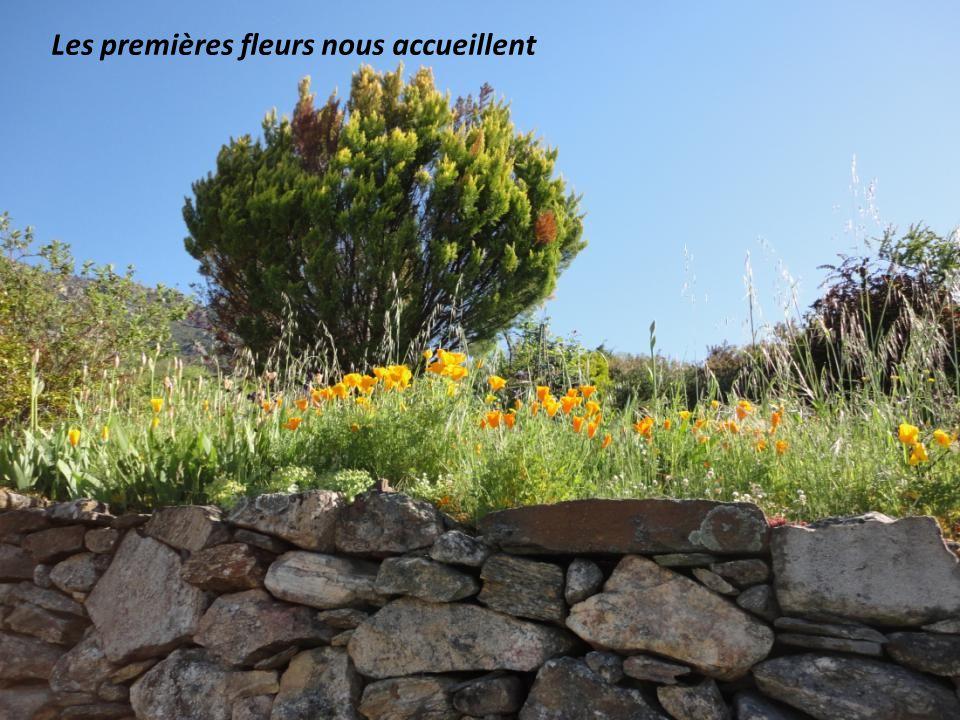 Les premières fleurs nous accueillent