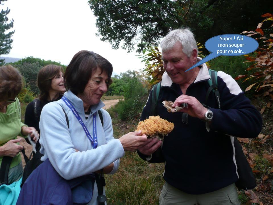 Yes ! Cest moi qui est trouvé ce champignon appelé Chou-fleur ou Crête de coq.