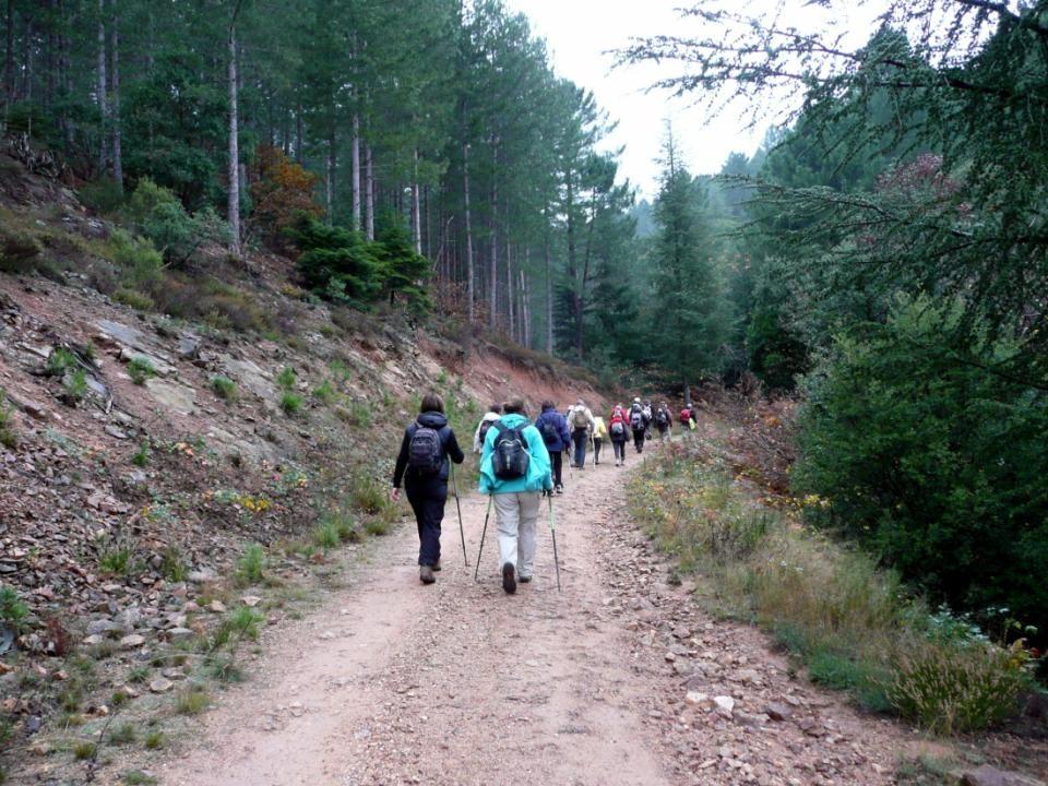 Nous poursuivons notre piste au milieu des châtaigniers, fougères et bruyères arborescentes.