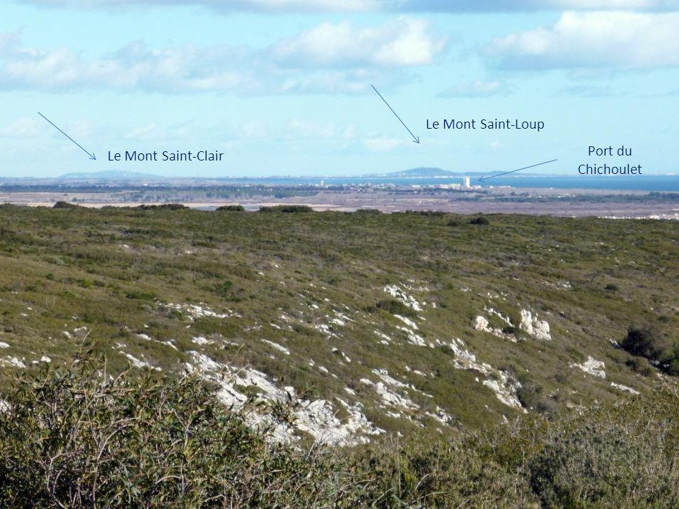 Un panorama à couper le souffle où se dévoilent la station de Saint- Pierre-la-Mer, l étang de Pissevache, l embouchure de l Aude avec le village des Cabanes-de-Fleury et au loin le mont Saint-Clair.