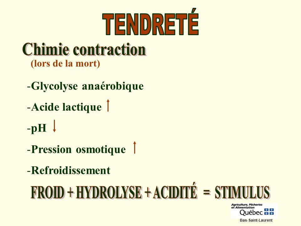 (lors de la mort) -Glycolyse anaérobique -Acide lactique -pH -Pression osmotique -Refroidissement