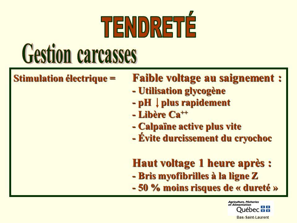 Stimulation électrique = Faible voltage au saignement : - Utilisation glycogène - pH plus rapidement - Libère Ca ++ - Calpaïne active plus vite - Évit