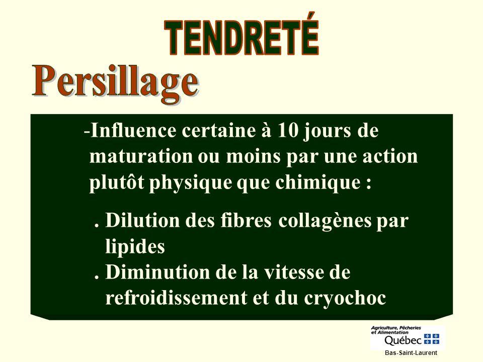 -Influence certaine à 10 jours de maturation ou moins par une action plutôt physique que chimique :. Dilution des fibres collagènes par lipides. Dimin