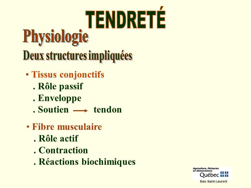 Tissus conjonctifs. Rôle passif. Enveloppe. Soutien tendon Fibre musculaire. Rôle actif. Contraction. Réactions biochimiques