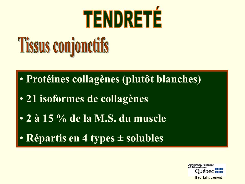 Bas-Saint-Laurent Quantité et type varient selon lâge, le type de muscle, la génétique, lalimentation, la régie Constitués en chaîne de collagène : la chaîne sallonge avec le temps devenant plus épaisse, plus résistante et moins soluble.