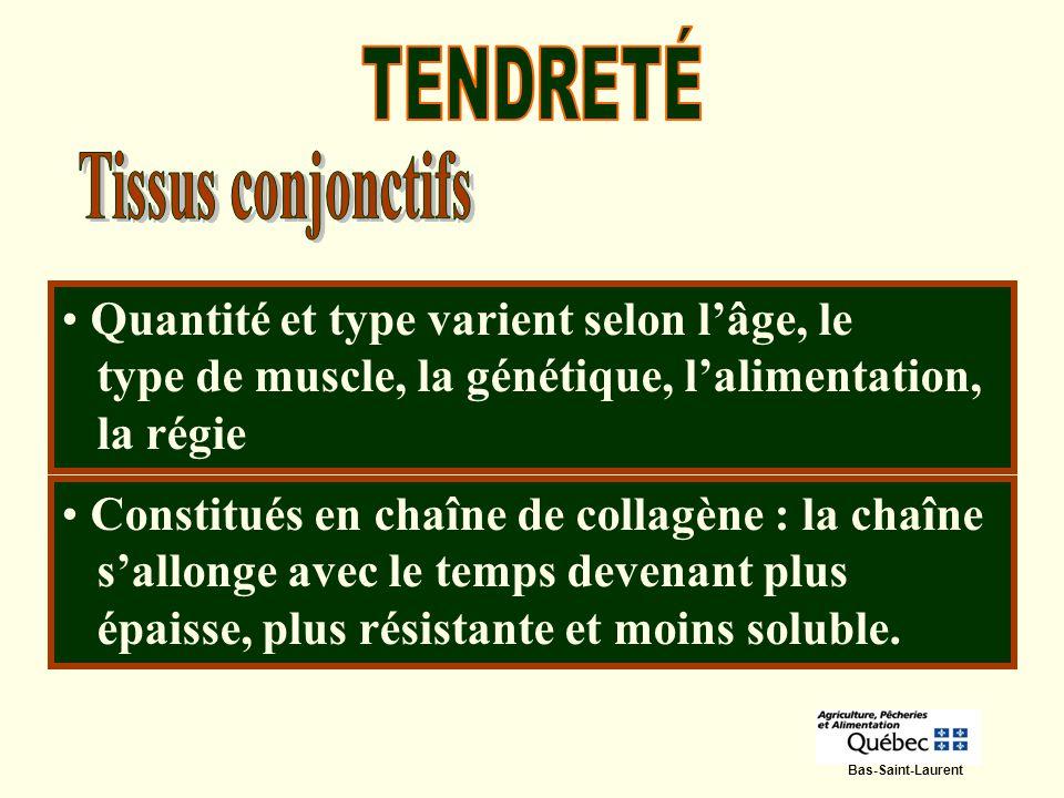 Bas-Saint-Laurent Quantité et type varient selon lâge, le type de muscle, la génétique, lalimentation, la régie Constitués en chaîne de collagène : la
