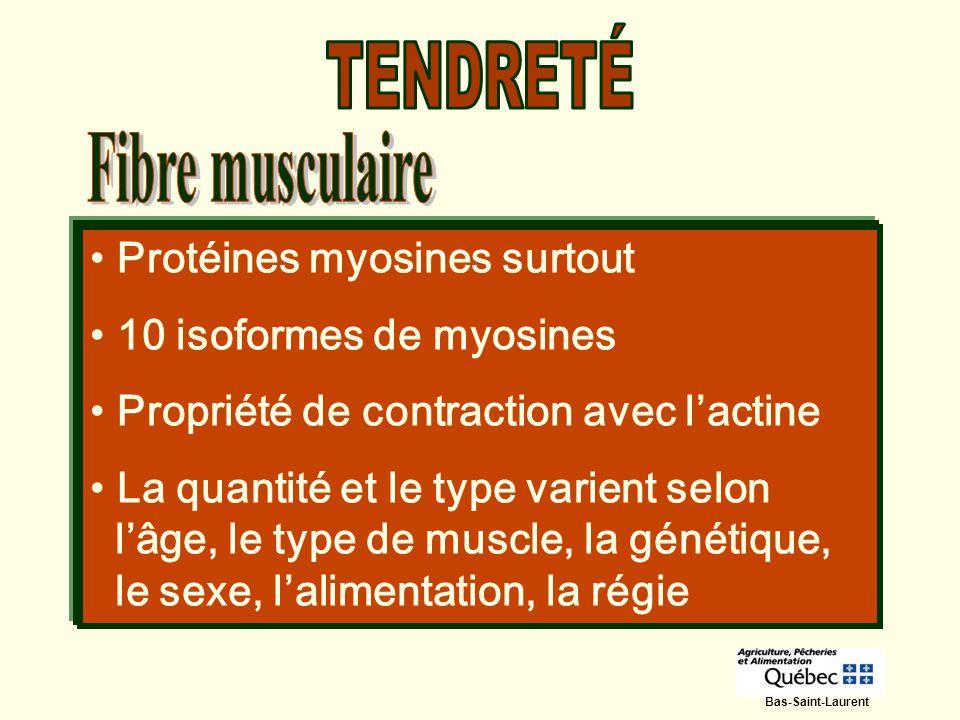 Protéines myosines surtout 10 isoformes de myosines Propriété de contraction avec lactine La quantité et le type varient selon lâge, le type de muscle