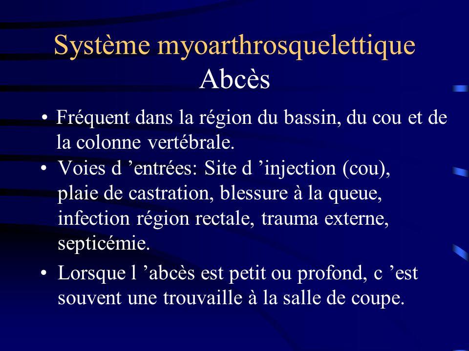 Système myoarthrosquelettique Abcès Voies d entrées: Site d injection (cou), plaie de castration, blessure à la queue, infection région rectale, traum