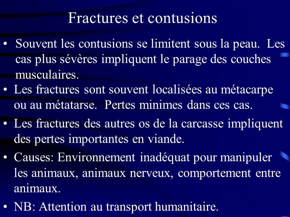 Fractures et contusions Les fractures sont souvent localisées au métacarpe ou au métatarse. Pertes minimes dans ces cas. Les fractures des autres os d