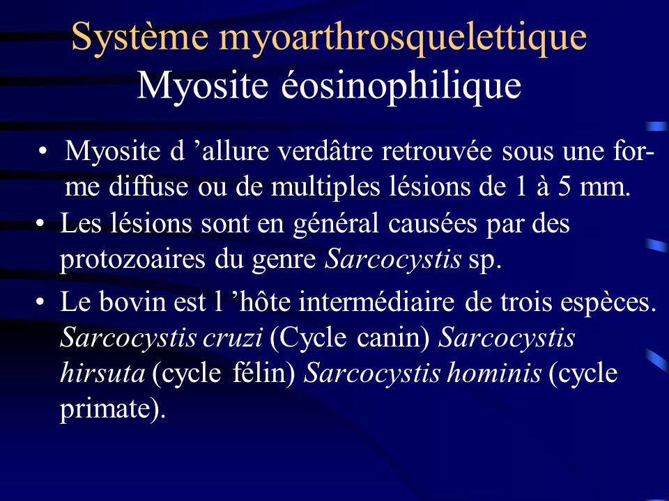 Système myoarthrosquelettique Myosite éosinophilique Les lésions sont en général causées par des protozoaires du genre Sarcocystis sp. Le bovin est l