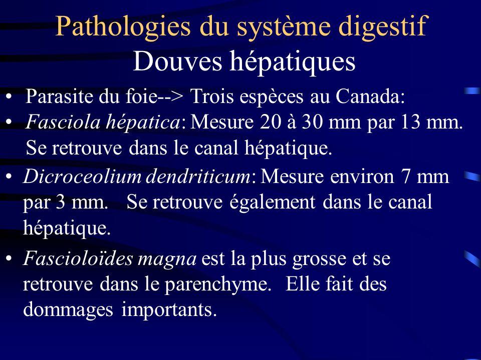 Pathologies du système digestif Douves hépatiques Dicroceolium dendriticum: Mesure environ 7 mm par 3 mm. Se retrouve également dans le canal hépatiqu