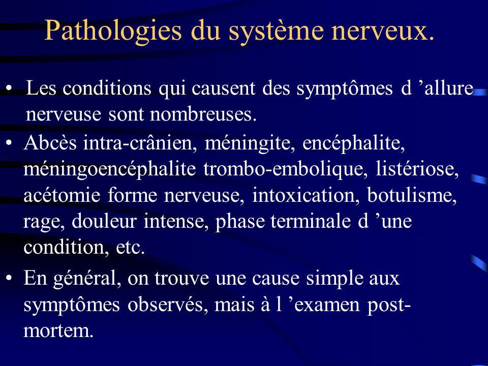 Pathologies du système nerveux. Abcès intra-crânien, méningite, encéphalite, méningoencéphalite trombo-embolique, listériose, acétomie forme nerveuse,