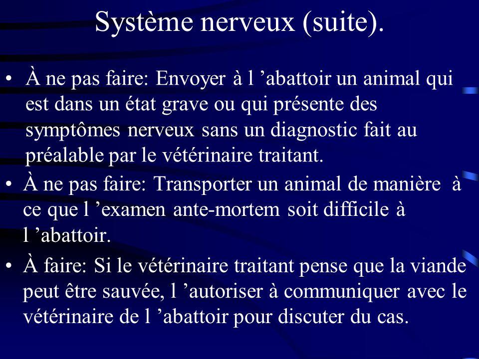 Système nerveux (suite). À ne pas faire: Transporter un animal de manière à ce que l examen ante-mortem soit difficile à l abattoir. À faire: Si le vé