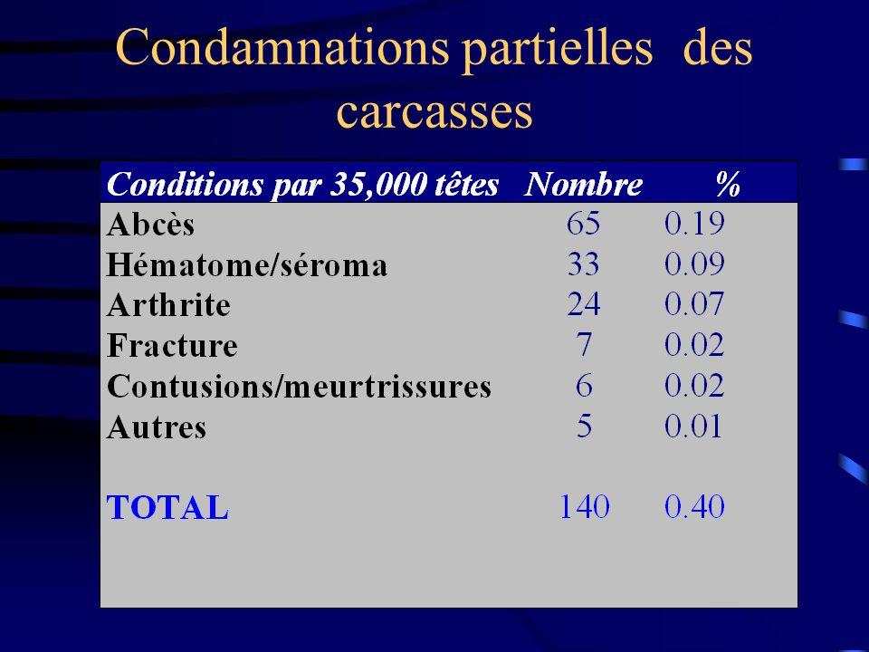 Pathologies du système digestif Douves hépatiques Dicroceolium dendriticum: Mesure environ 7 mm par 3 mm.