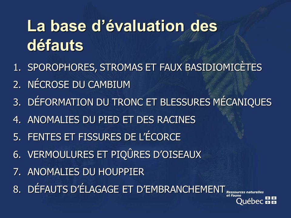 La base dévaluation des défauts 1.SPOROPHORES, STROMAS ET FAUX BASIDIOMICÈTES 2.NÉCROSE DU CAMBIUM 3.DÉFORMATION DU TRONC ET BLESSURES MÉCANIQUES 4.AN