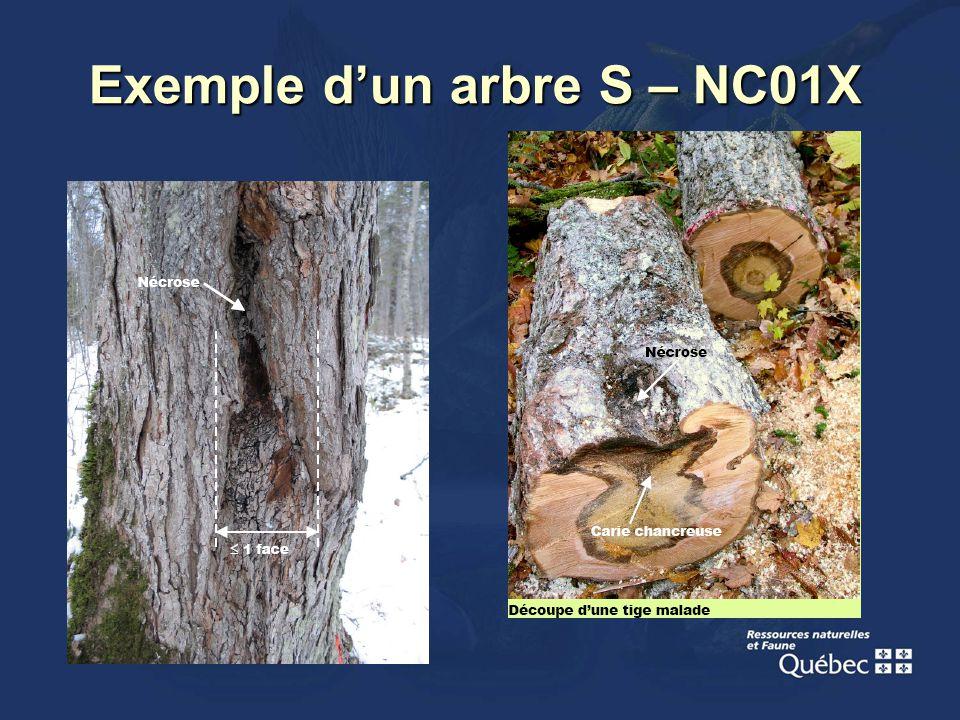 Exemple dun arbre S – NC01X
