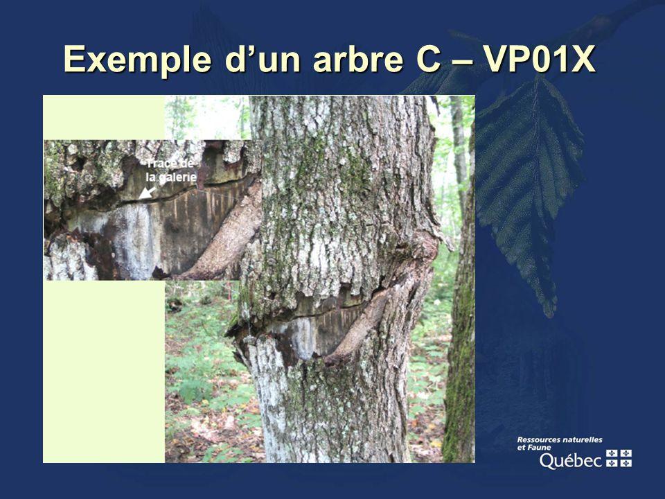 Exemple dun arbre C – VP01X