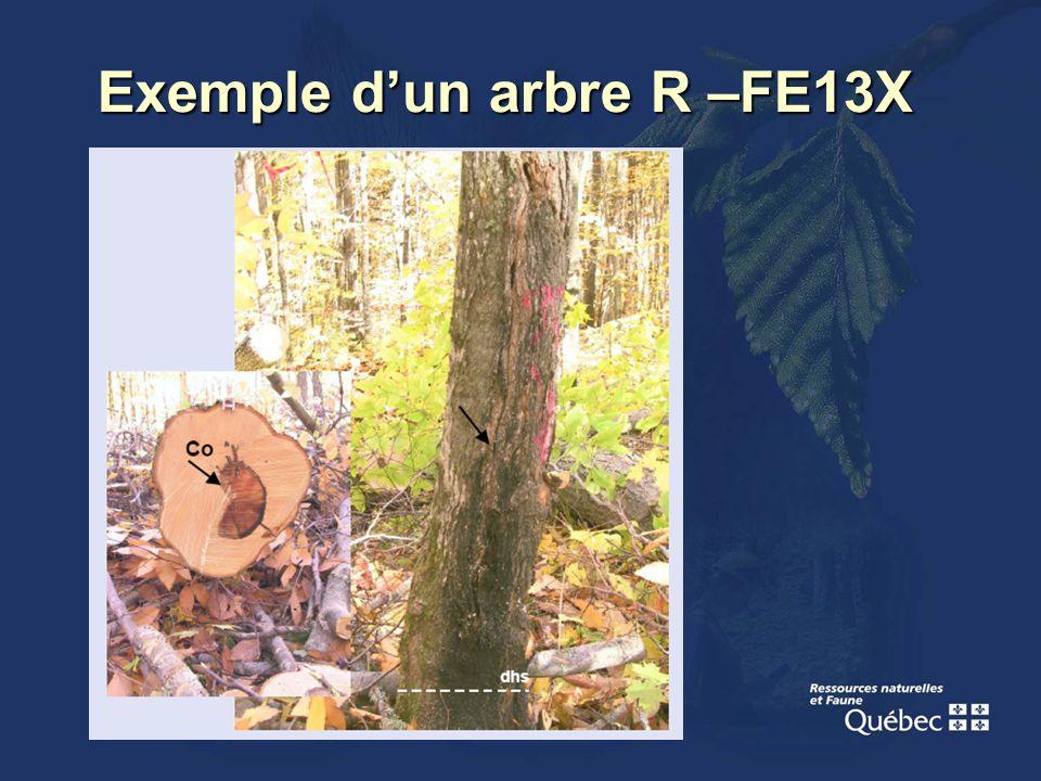 Exemple dun arbre R –FE13X