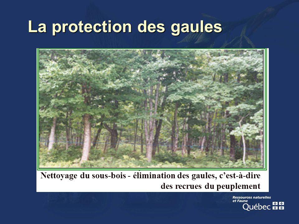La protection des gaules Nettoyage du sous-bois - élimination des gaules, cest-à-dire des recrues du peuplement