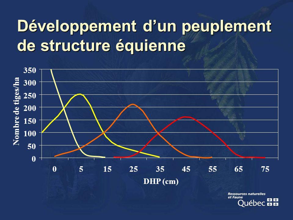 Développement dun peuplement de structure équienne 0 50 100 150 200 250 300 350 0515253545556575 DHP (cm) Nombre de tiges/ha