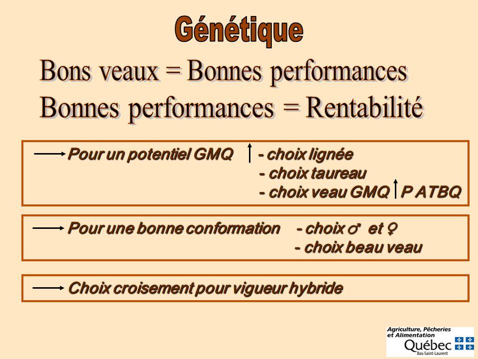 Pour un potentiel GMQ - choix lignée - choix taureau - choix veau GMQ P ATBQ Pour un potentiel GMQ - choix lignée - choix taureau - choix veau GMQ P A
