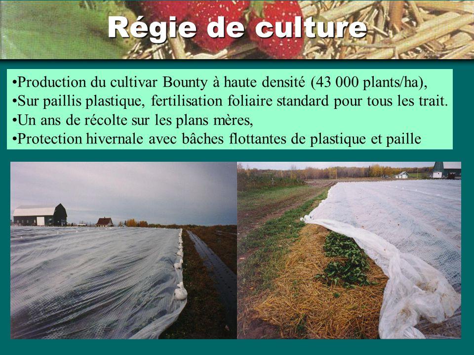 Régie de culture Production du cultivar Bounty à haute densité (43 000 plants/ha), Sur paillis plastique, fertilisation foliaire standard pour tous le
