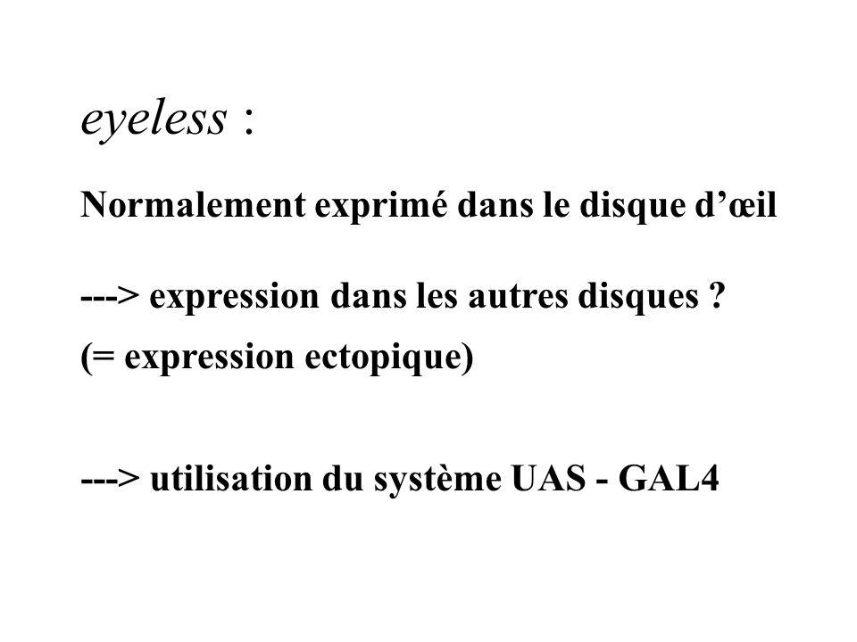 eyeless : Normalement exprimé dans le disque dœil ---> expression dans les autres disques ? (= expression ectopique) ---> utilisation du système UAS -