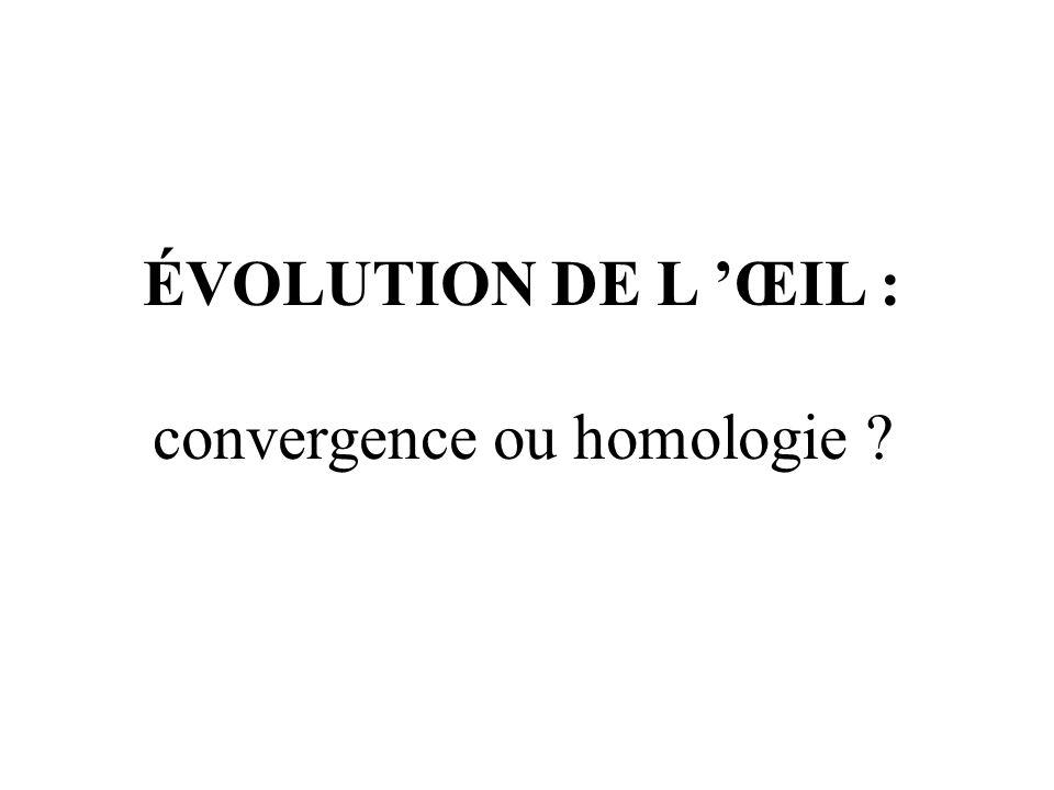 ÉVOLUTION DE L ŒIL : convergence ou homologie ?
