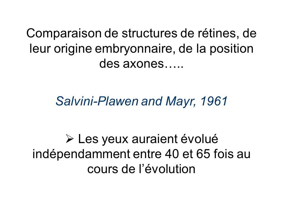 Comparaison de structures de rétines, de leur origine embryonnaire, de la position des axones….. Salvini-Plawen and Mayr, 1961 Les yeux auraient évolu