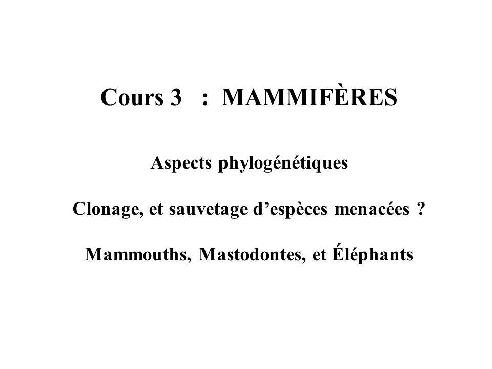 Cours 3 : MAMMIFÈRES Aspects phylogénétiques Clonage, et sauvetage despèces menacées .