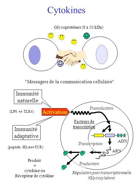Familles de récepteurs Apparentés à la super famille des Ig Exemple: IL-1R Famille des Récepteurs des TNF Exemples : TNF, LT CD40-L CD95-L Activation Apoptose Famille des Récepteurs des interférons Exemples : IFN /, IFN Famille des Récepteurs à l IL-8 NH2 COOH Exemples : IL-8 R, C5a-R, PAF-R fMLP-R Exemple: Chaîne : IL-3R, IL-5R, GM-CSF R Chaîne : chaîne commune Récepteurs des hématopoïétines cccccccc